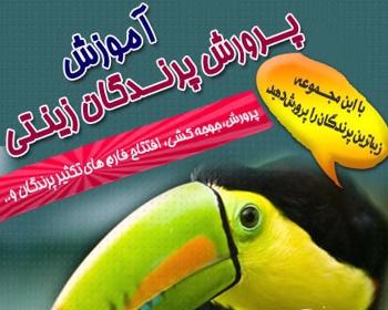آموزش پرورش پرندگان زینتی - اورجینال