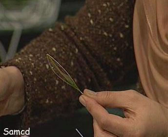 آموزش ساختن گل شیشه ای